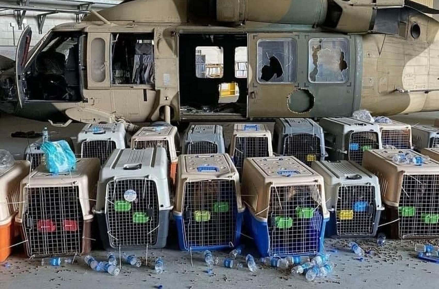 В Пентагоне отрицают, что ВС США оставили в Афганистане служебных собак в клетках