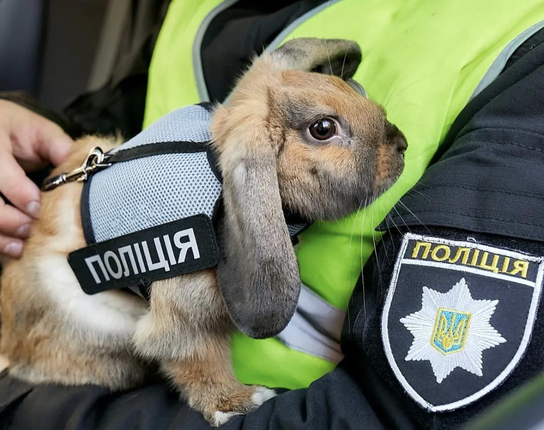 Зверополис: первый в Украине кролик-полицейский завел страницу в Instagram (видео)