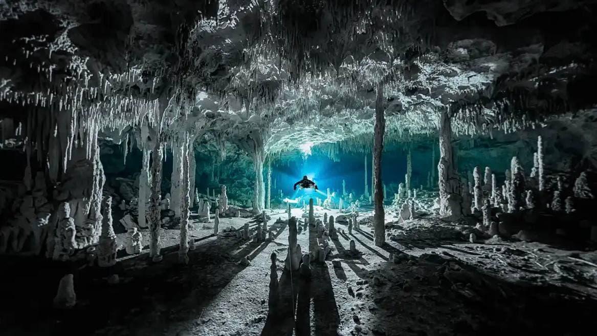 Ocean Photography Awards 2021: члены жюри выбрали лучшие фото подводного мира