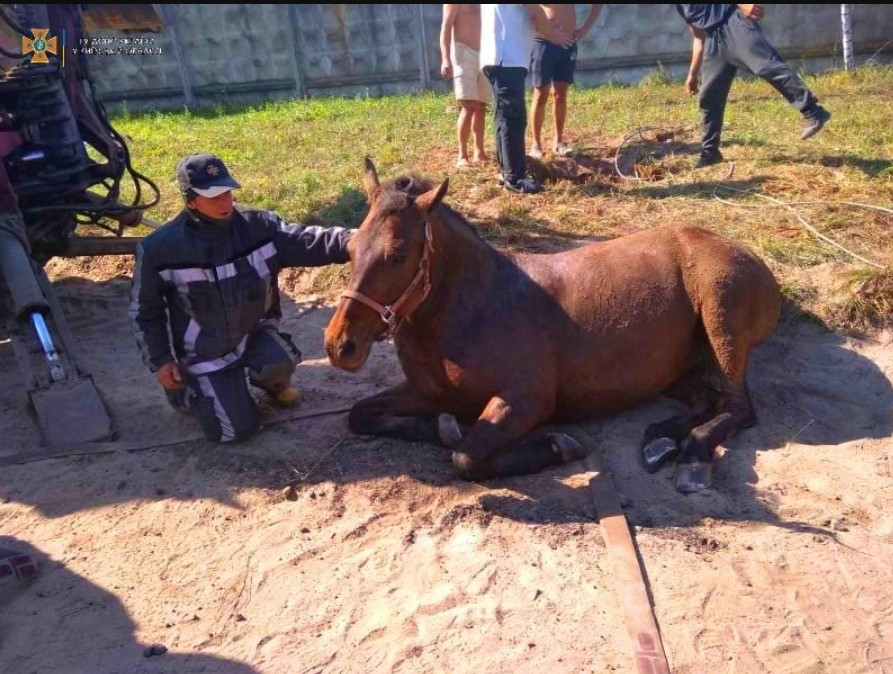 В ГСЧС рассказали о спасении коня из коллектора: волонтеры требуют удалить пост и извиниться (фото)
